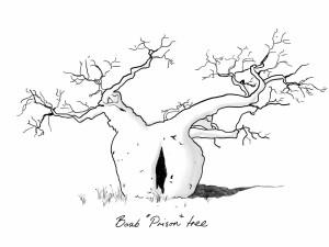 boab-prison-tree-mr